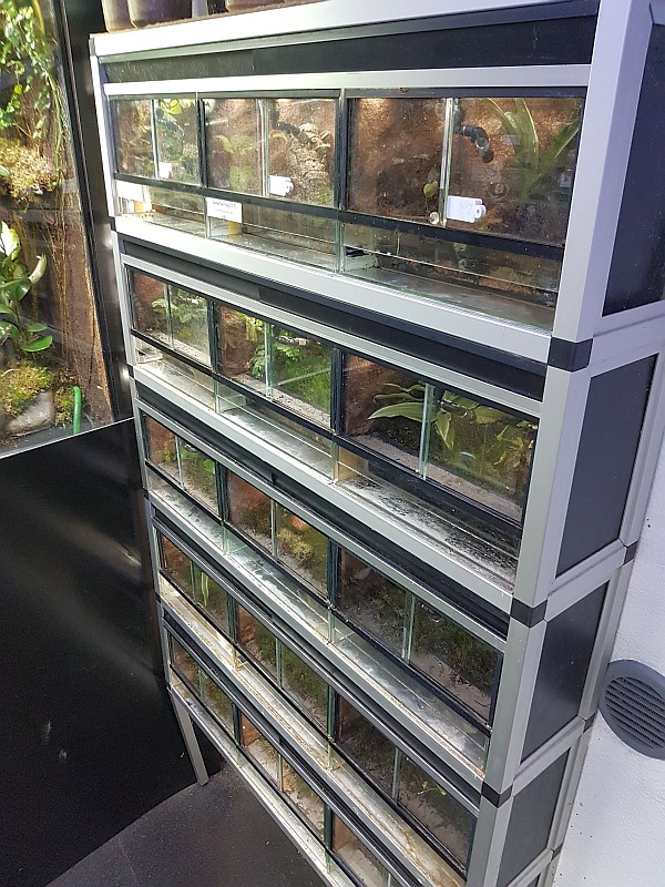 South Coast Dart Frogs Facility